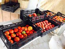 Fresh picked tomatoes at the farm!